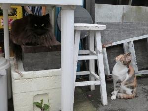 Zwei Katzen in Shimoda