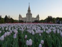 Die Lomonossov Universität
